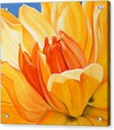 Saffron Splendour Acrylic Print