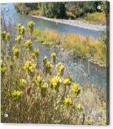 Sage Along The River Acrylic Print