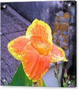 Saging Saging Tropical Flower Philippines Acrylic Print