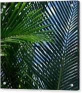 Sago Palm Fronds Acrylic Print