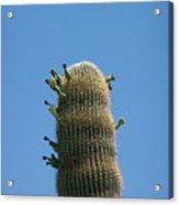 Saguaro 1 Acrylic Print
