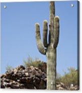 Saguaro 3 Acrylic Print