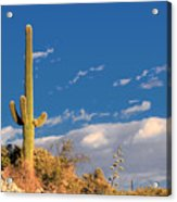 Saguaro Cactus - Symbol Of The American West Acrylic Print