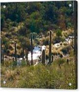 Saguaro Creek Acrylic Print
