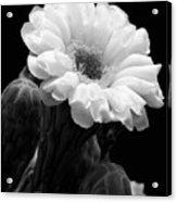 Saguaro First Bloom Acrylic Print