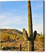 Saguaro Hill Acrylic Print