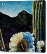 Saguaro In Bloom Acrylic Print