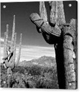 Saguaro Acrylic Print