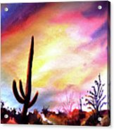 Saguaro National Monument Acrylic Print
