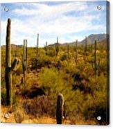 Saguaro National Park Acrylic Print