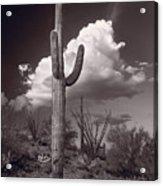 Saguaro Sunset Arizona Bw Acrylic Print