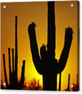 Saguaro Sunset Acrylic Print by Sandra Bronstein