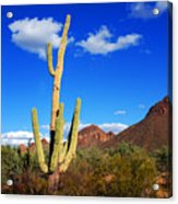 Saguaro Tree Acrylic Print