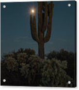 Saguro At Moonlight-img_1593-2016 Acrylic Print