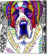 Saint Bernard Acrylic Print