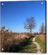 Saint Johns Marsh In Fall 3 Acrylic Print