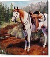 Saint Quincy Paint Horse Portrait Painting Acrylic Print