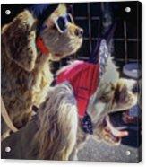 Salesdogs - Venice Beach Acrylic Print
