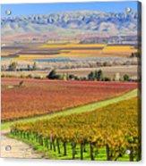 Salinas Valley Acrylic Print