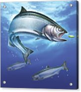 Salmon Painting Acrylic Print