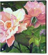 Salmon Roses Acrylic Print