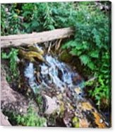 Mill Creek Canyon - Utah Acrylic Print