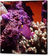 Salt Water  Aquarium Acrylic Print