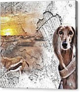 Saluki - The One And Only Acrylic Print