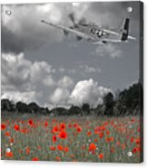 Salute To The Brave - P51 Flying Over Poppy Field Acrylic Print