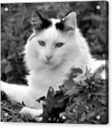 Sampson In Black And White Acrylic Print