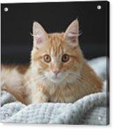 Samson_speaks Kitten Years Acrylic Print