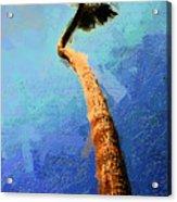 San Clemente Beach Palm Acrylic Print by Ron Regalado