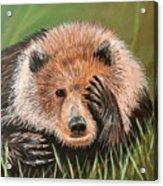 San Diego Bear Acrylic Print