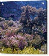 San Diego County Canyon Acrylic Print