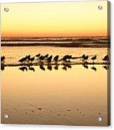 San Diego Shorebirds Acrylic Print
