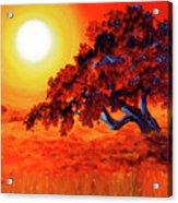 San Mateo Oak In Bright Sunset Acrylic Print