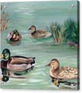 Sanctuary For Ducks Acrylic Print