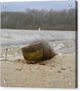 Sand And Shell Acrylic Print