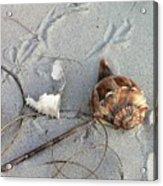 Sand And Shells Acrylic Print