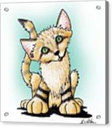 Sand Cat Acrylic Print