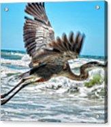 Sand Crane Acrylic Print