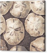 Sand Dollars Acrylic Print