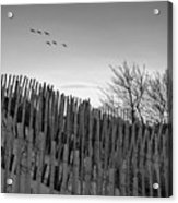 Dune Fences - Grayscale Acrylic Print