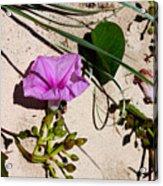 Sand Flowers Acrylic Print