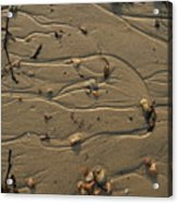 Sand Patterns 1 Acrylic Print