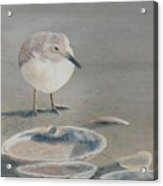Sand Puddles Acrylic Print