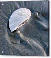 Sanddollar Acrylic Print