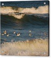 Sanderlings In Flight Acrylic Print