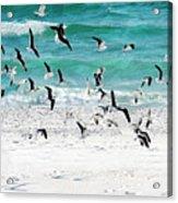 Sandestin Seagulls B Acrylic Print