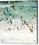 Sandestin Seagulls D Acrylic Print